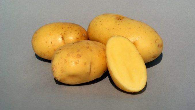 Mit Annabelle beginnt die Frühkartoffelsaison -