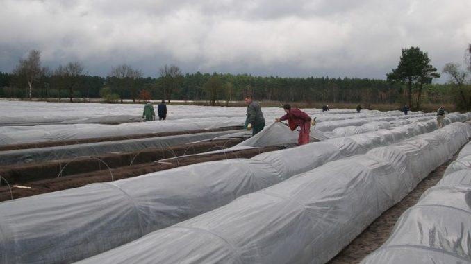 Mindestlohn trübt Stimmung bei der Ernte - Foto: Landvolk