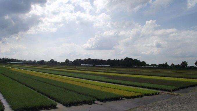 Bäume und Blumen kommen aus dem Ammerland - Foto: Landvolk