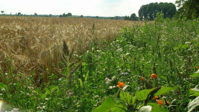 Statemant zum Grundstücksmarkt - Foto: Landvolk