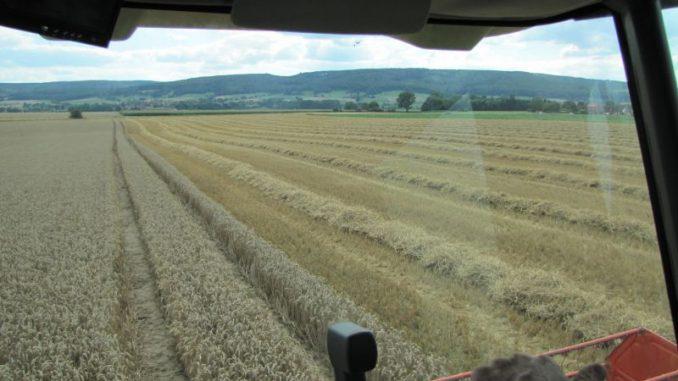 Durchwachsenes Sommerwetter dämpft Getreideernte - Foto: I. Möller