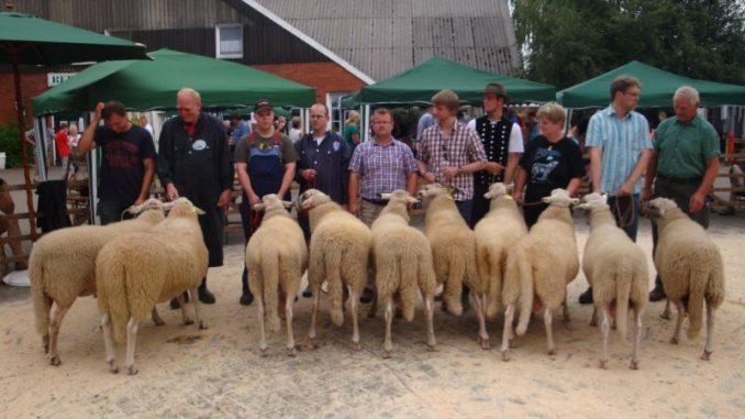 Im Sommer kommen die Schafe unter den Hammber - Foto: Landesschafzuchtverband