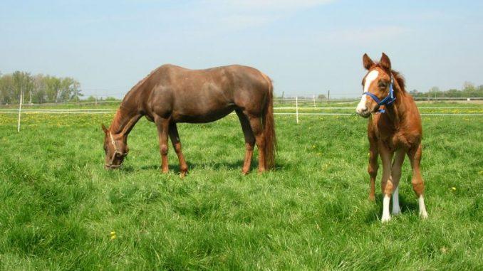 Deutsche Pferde in Rio stark vertreten - Foto: Landvolk