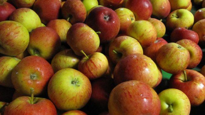Apfelbäume tragen reichlich süße Früchte - Foto: Landvolk