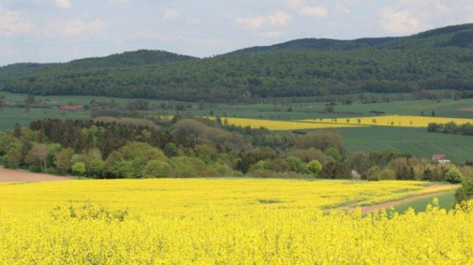 Bodenpreise stiegen langsamer - Foto: Landvolk