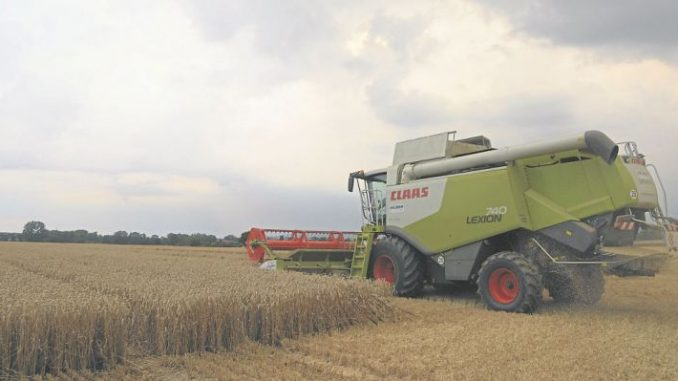 Miese Ernte - Bauern sind enttäuscht - Foto: Landpixel