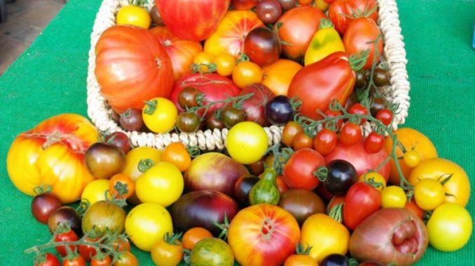 Tomaten aus Niedersachsen sind bunt - Foto: Sundermeyer