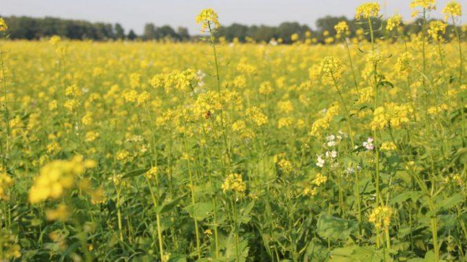 Radler entdecken bunte Seite der Landwirtschaft - Foto: Landvolk