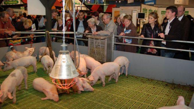 Eurotier ist weltweites Forum der Tierhaltung - Foto: Landvolk