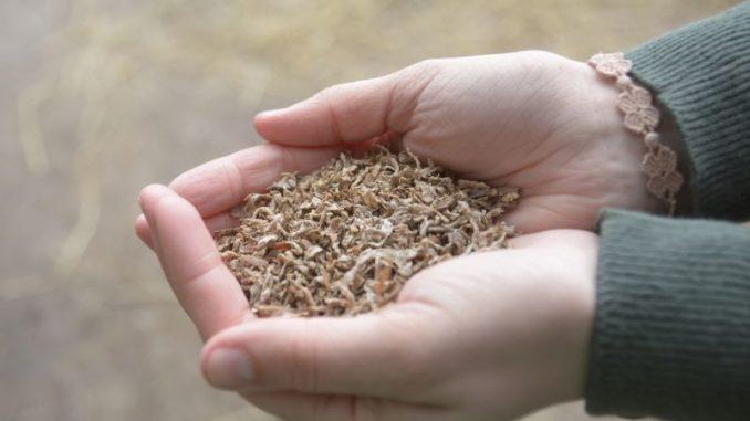 Zuckerrübenschnitzel bringen Abwechslung in den Trog - Foto: landpixel