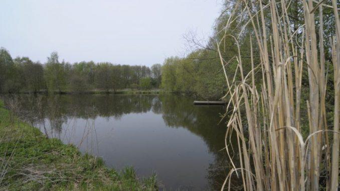 In der Teichwirtschaft begint die Ernte - Foto: Landpixel