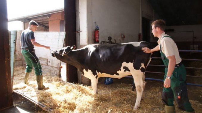 Viele junge Menschen möchten Landwirt werden -