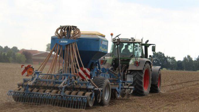 Landwirte bleiben Winterraps treu -