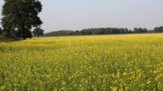 Nachhaltigkeitscheck wurde überarbeitet - Foto: Landvolk