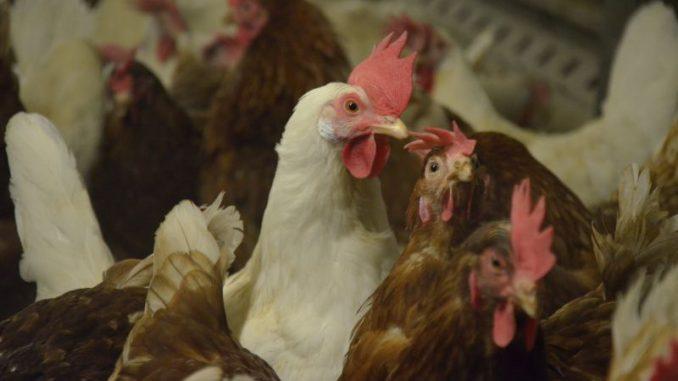 Antibiotika werden gezielter eingesetzt - Foto: Landvolk