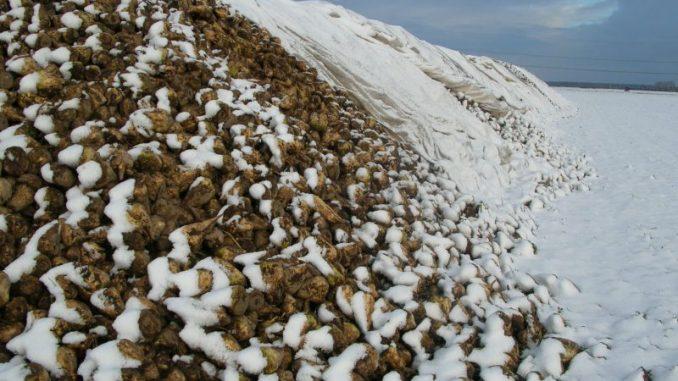 Süße Plätzchen mit Zucker aus Niedersachsen - Photo: Landvolk