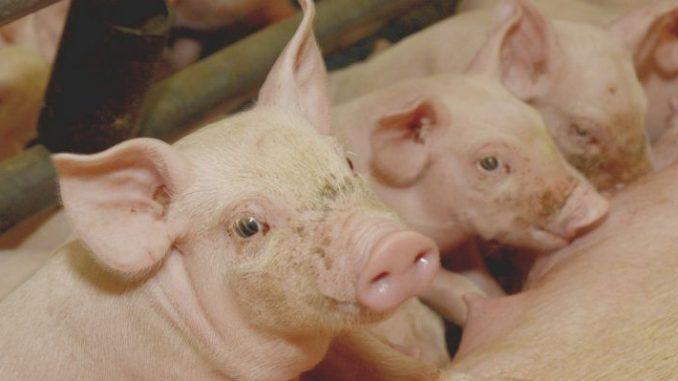 Dialog sieht anders aus - Bauernverbände kritisieren Vorgehen - Foto: Landpixel