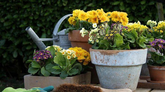 Fleißige Gärtner werden jetzt belohnt - Foto: GMH/FGJ