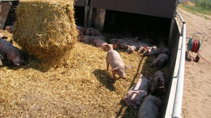 Mangelnde Wertschöpfung trifft auch Biobauern - Foto: Landvolk