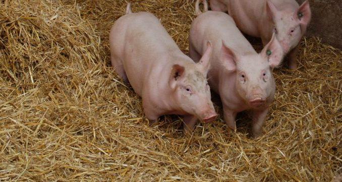 Biomarkt braucht ständig Pflege - Foto: Landvolk