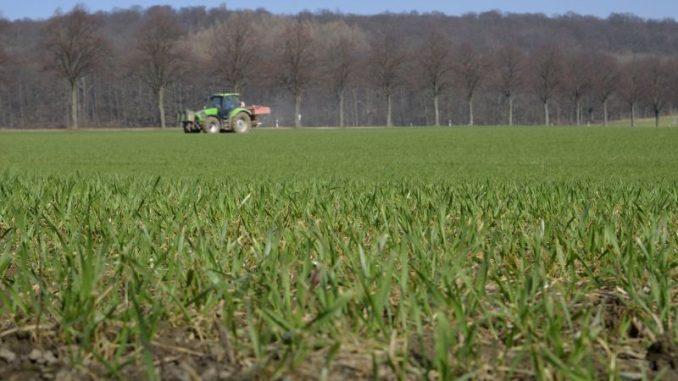 Wintergetreide erwacht und braucht Nährstoffe - Foto: Landpixel