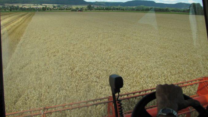 Bauern denken noch nicht an Ernteschätzungen - Foto: Landvolk