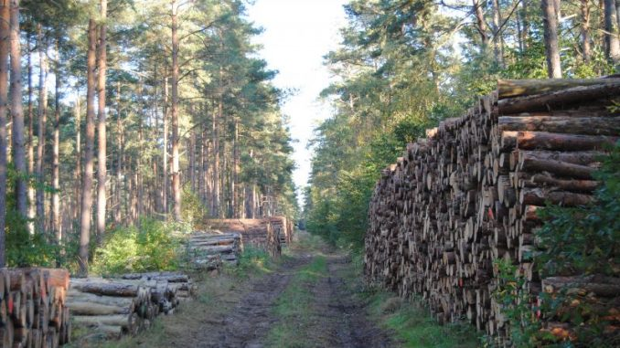 Waldbewirtschaftung zwischen Ökologie und Ökonomie - Foto: Landvolk