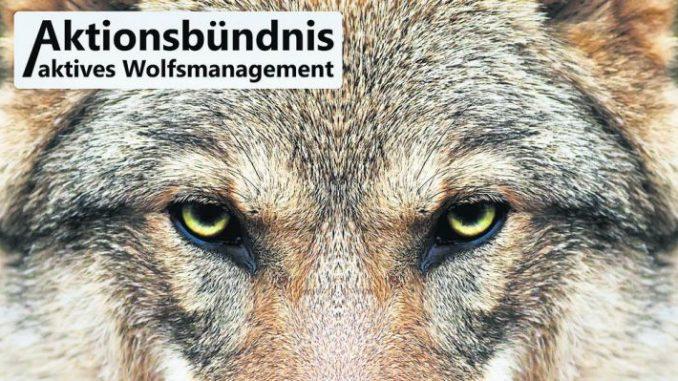 Wolfsplakat zum Nachdrucken - Foto: Fotolia/anadamanec