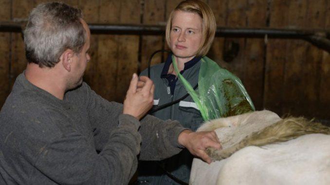 Niedersachsens Tierärzte noch ohne Nachwuchssorgen - Foto: Landpixel