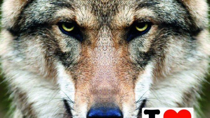 Mahnfeuer gegen unkontrollierte Ausbreitung des Wolfes -