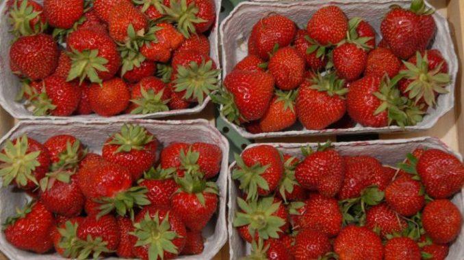 Wer Erdbeeren pflücken möchte