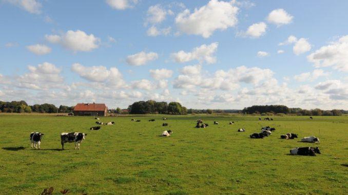 Milchmarkt deutet weiter auf Entspannung - Foto: Landpixel