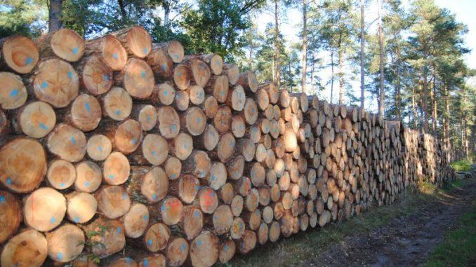 Waldbesitzer wollen mehr Holz ernten - Foto: Landvolk