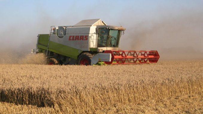 Große Sorge um Getreideernte - Foto: Landvolk