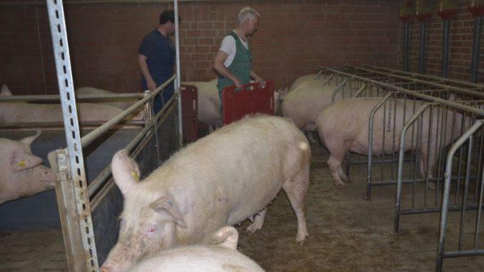 Tierhalter bitten um höchste Vorsicht - Foto: Landvolk