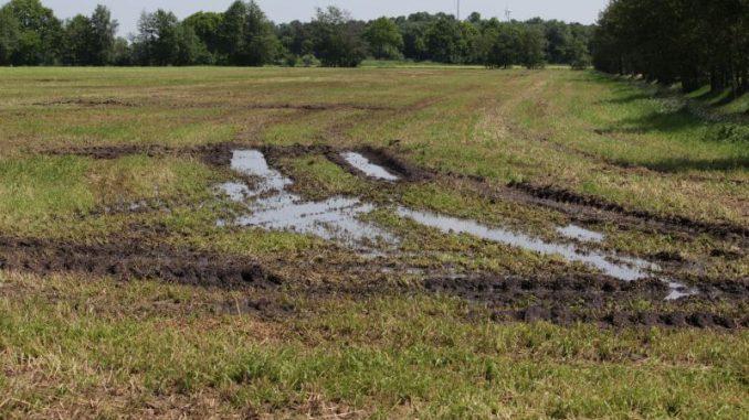 Der Boden muss das Wasser erstmal verdauen - Foto: Landvolk