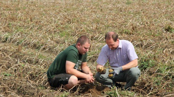 2017 ist ein schwieriges Jahr für Kartoffelbauern - Foto: Landvolk
