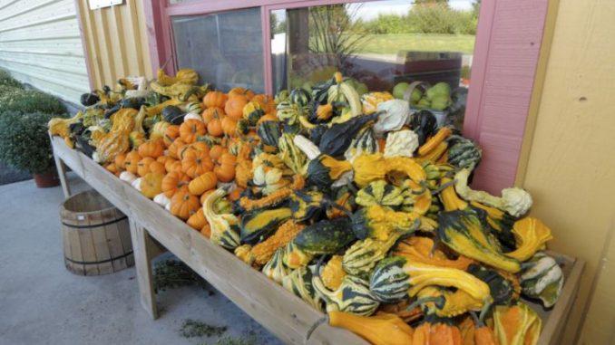 Der Herbst schmeckt nach Kürbis - Foto: Landvolk