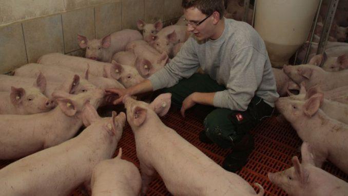 Veredelungstag diskutiert Nutztierhaltungsstrategien - Foto: Landpixel