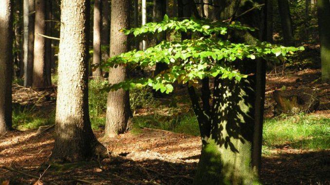 FFH reicht nicht mehr aus - Foto: Waldbesitzerverband