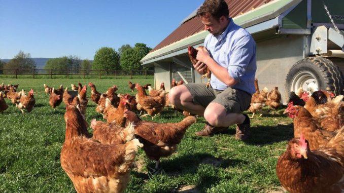 Fahrt frei für Hühnermobile - Foto: Möller