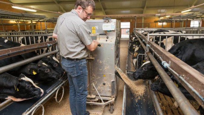 Die Gesundheid der Kälber steht im Mittelpunkt - Foto: KDK
