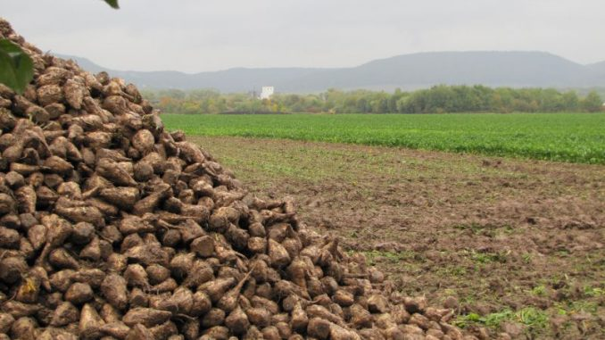 Zuckermarkt muss sich zum Quotenende neu finden - Foto: Imke Möller
