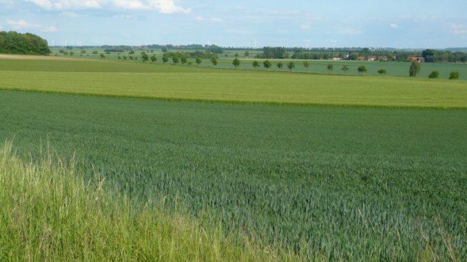 Für die Landwirtschaft bleibt weniger Platz - Foto: Rohloff