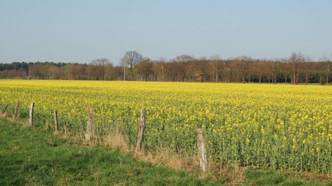 Bauern mussten einige Ölfelder aufgeben - Foto: Landvolk