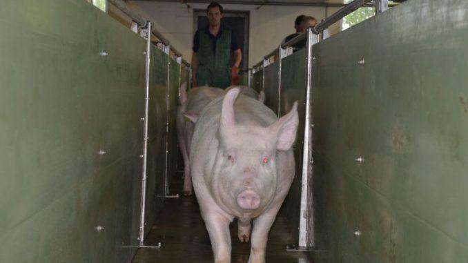 Verantwortungsvoller Umgang mit Antibiotika - Foto: Landvolk