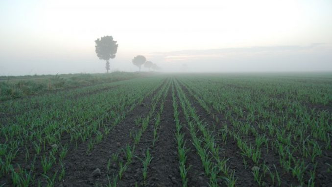 Landvolk lädt zum 23. Braunschweiger Getreidetag - Foto: Landvolk