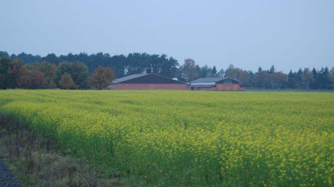 Viele Bauern sind von Gewinnen noch weit entfernt - Foto: Landvolk