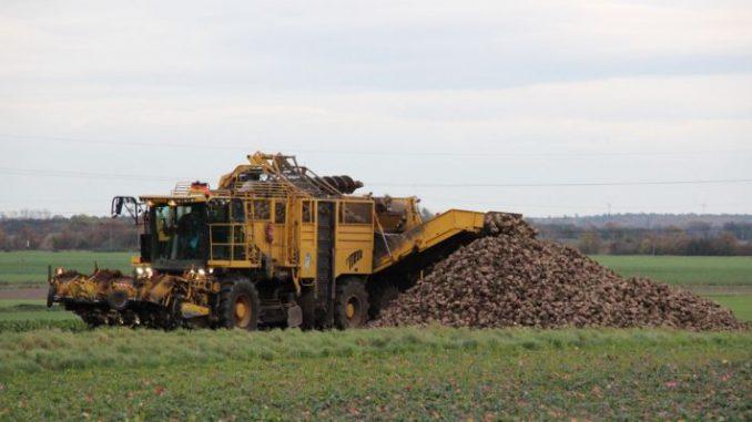 Zuckermarkt gerät in Bewegung - Foto: Landvolk