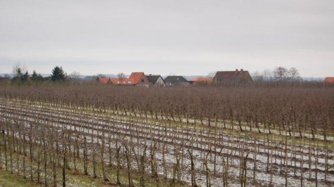 Landkreis Stade bleibt Niedersachsens Apfelmekka - Foto: Landvolk